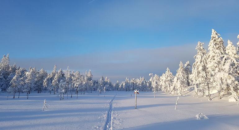 Ski trails at Gyllbergen naturreservat.
