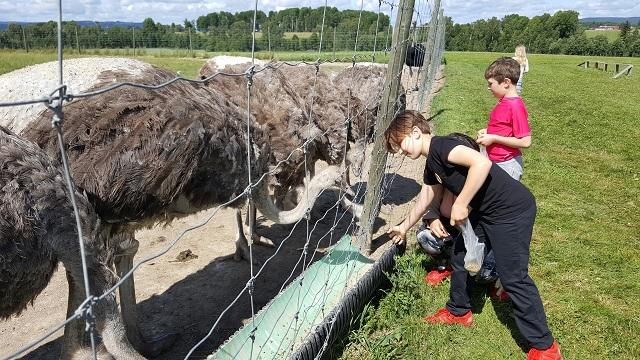 At ostrich farm in Borlänge.